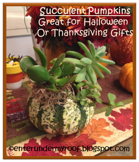 Mini Pumpkin Succulents: Great idea for table decoration or gift!